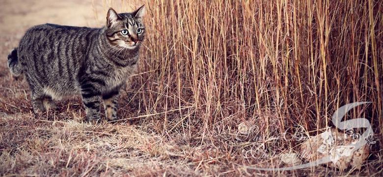 cat, portraits, Farm, shelley burt, shelley burt photography, johannesburg lifestyle photographer, lifestyle photographer