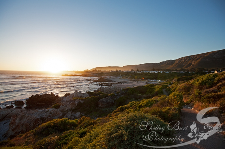 Hermanus, Travel photography, Fynbos, shelley burt, shelley burt photography, johannesburg lifestyle photographer, lifestyle photographer